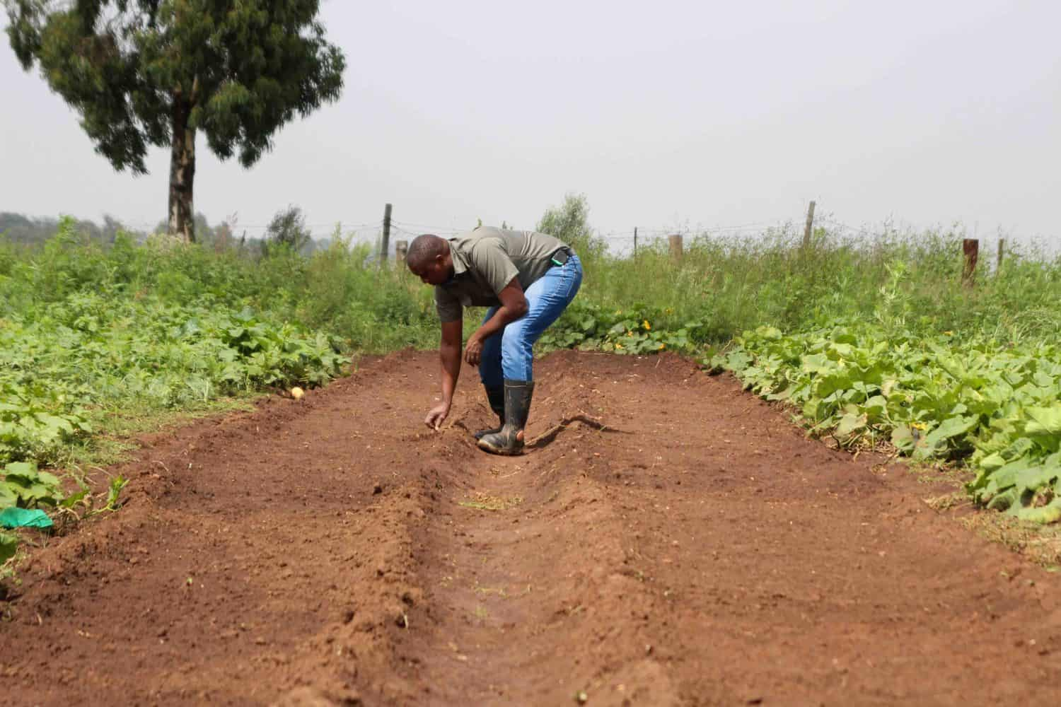 Nhlanhla Zuma is inspecting some of the garlic that he's planted in his farm, which he expects to harvest sometime later in the year. Photo: Magnificent Mndebele