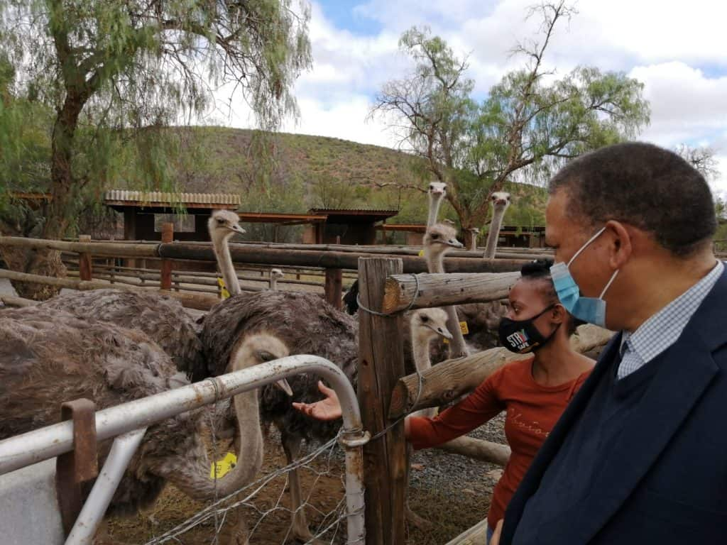 Molafelo Mokoelele, a scientific researcher, interacting with Western Cape minister of agriculture Dr Ivan Meyer. They were on the province's ostrich research farm in Oudsthoorn in the Klein-Karoo. Photo: Supplied/Food For Mzansi