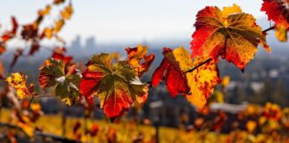 Our friends at People's Weather (PPL WX) confirmed that the astronomical autumn begins with the autumnal equinox at exactly 11:37 on Saturday morning. Photo: Supplied/Food For Mzansi