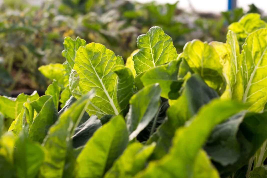 Booysens Tunnel Farming hydroponics