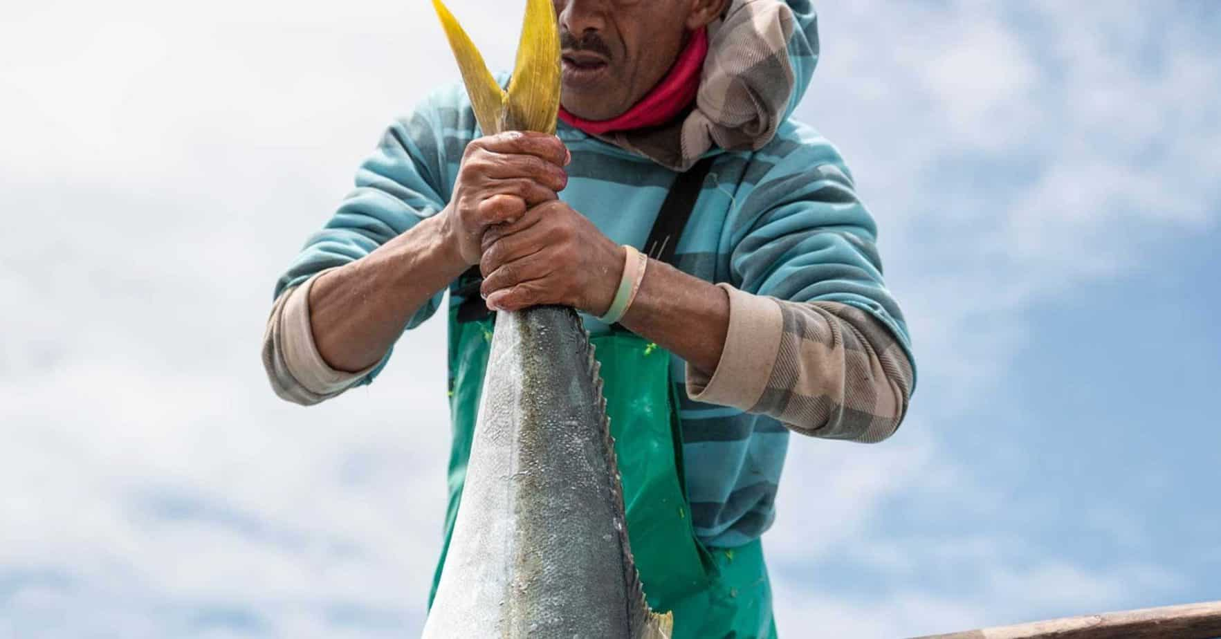 In many ways, South Africans have become used to paying more for fish during the Easter long weekend. He explains that at the harbour, when the boats come in, fishermen operate like auctioneers. Photo: ABALOBI/Facebook