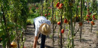 principles of permaculture