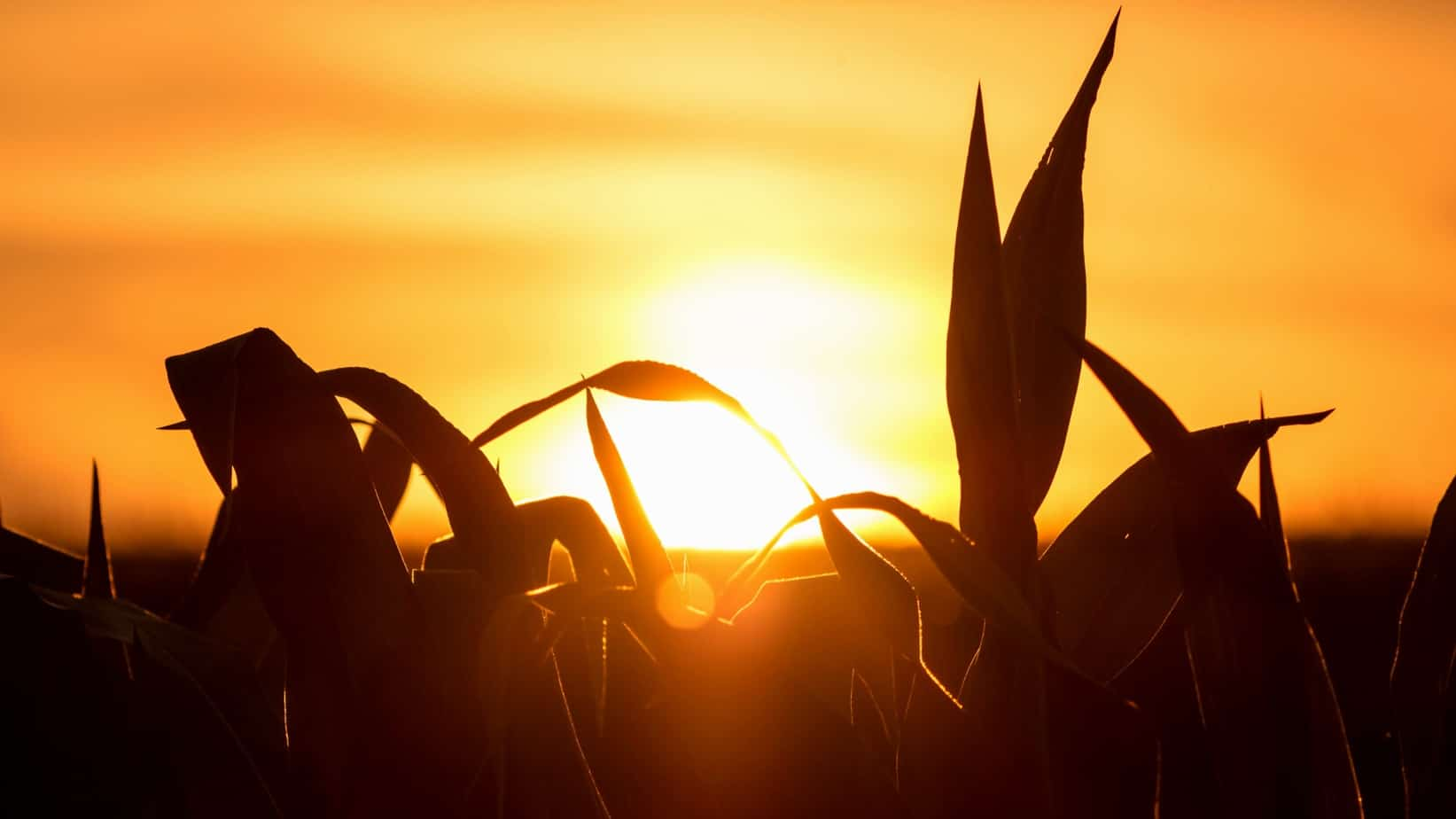 Land expropriation: Agri SA warns that today's farmers cannot be solely held responsible for apartheid land injustices. Photo: Supplied/Food For Mzansi