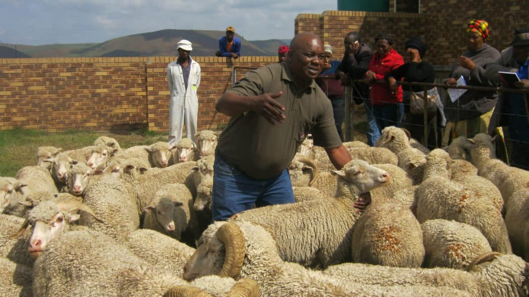 Agricultural economist Malapane Thamaga believes if farmers operate as a collective it enables them to negotiate for good prices rather that competing amongst themselves, leading to buyers dictating their prices. Photo: Supplied