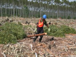 The forestry sector contributes 1,20% to GDP and employs just more than 200 000 people. Photo: Supplied/SA Forestry