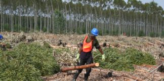 Only the forestry and fisheries industries recorded an overall increase in employment in the fourth quarter of 2020, according to the latest employment figures. Photo: Supplied/SA Forestry