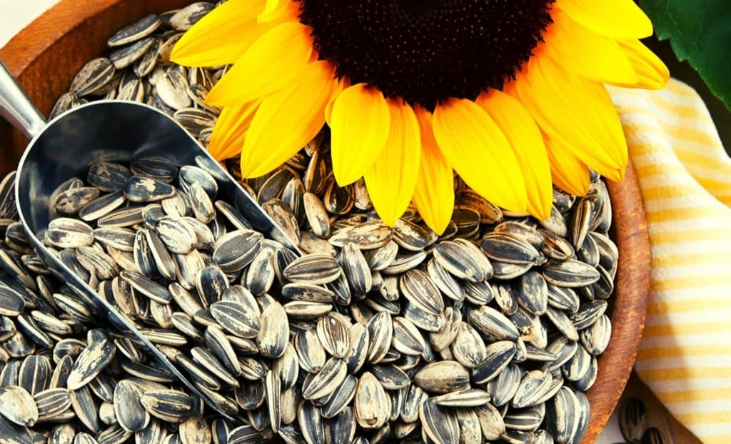 The latest production forecast for sunflower seeds dropped to 696 290 tonnes. Photo: Supplied/Food For Mzansi
