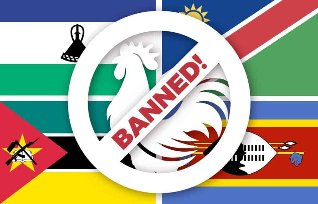 Following an avian influenza outbreak in April, all of Mzansi's neighbouring countries have lifted the ban on exports of live chicken and unprocessed products, except for Lesotho, which has banned exports from Gauteng. Photo: Food For Mzansi