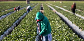Shay Myers, an Idaho farmer, took to Twitter to raise alarm about the huge demand for foreign farmworkers in the United States. Photo: Supplied/Food For Mzansi