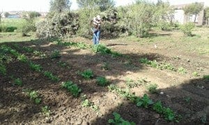 Hola Le Rona recently received training, seedlings, fruit trees as well as tools from Shoprite Group. Photo: Supplied/Food For Mzansi