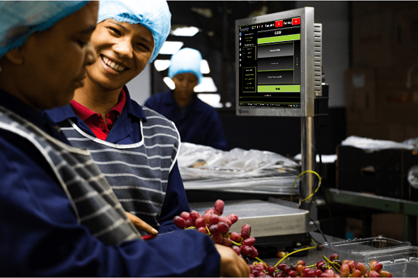 Adagin is known for many technology solutions in agriculture. This includes a smart-weigh scale that ensures a close correlation between punnets scanned and packed. Photo: Supplied/Food For Mzansi