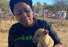 Livestock farming: When livestock farmer Boitumelo Modisane bought her first cattle at auction, she new she was finding her place in the world. Photo: Supplied/Food For Mzansi