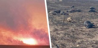 Last week, 7 000 sheep were left without grazing after almost 30 000ha were destroyed during a runaway veld fire in Boshof and Dealesville in the Free State. Photos: Supplied/Food For Mzansi