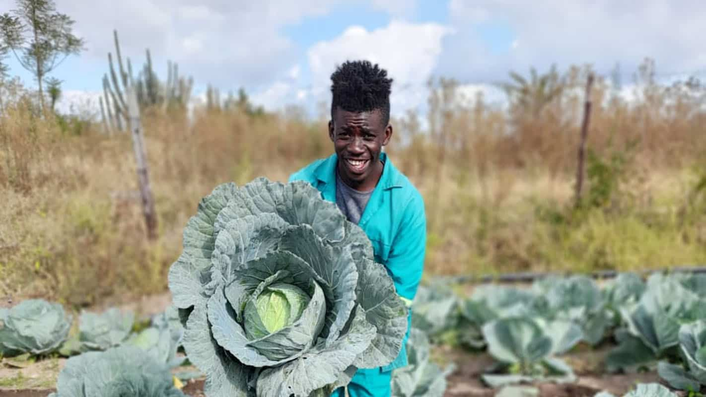 Katlego Mohloding started a poultry farm as a side hustle while a full-time student at the University of Limpopo. He then started vegetable farming to supplement the cash flow from his chicken business. Photo: Manare Matabela/Food For Mzansi