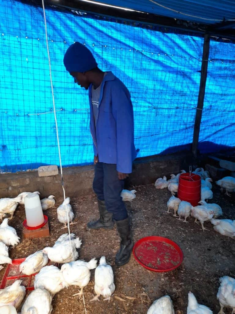 The income and cash flow from Katlego Mohloding's vegetable farm helps him build his primary business. The demand for his chickens is far greater than he can currently supply. Photo: Manare Matabola