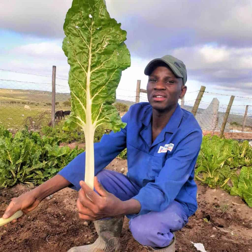 Social grant: Nkosinathi Makamela is a young man took his first steps into small-scale farming, but he has big dreams to become a commercial farmer in the future. Photo: Supplied/Food For Mzansi