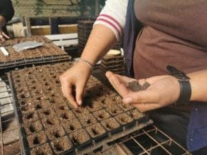 SEED's Easy Peasy permaculture project makes accesing organic vegetables easier.