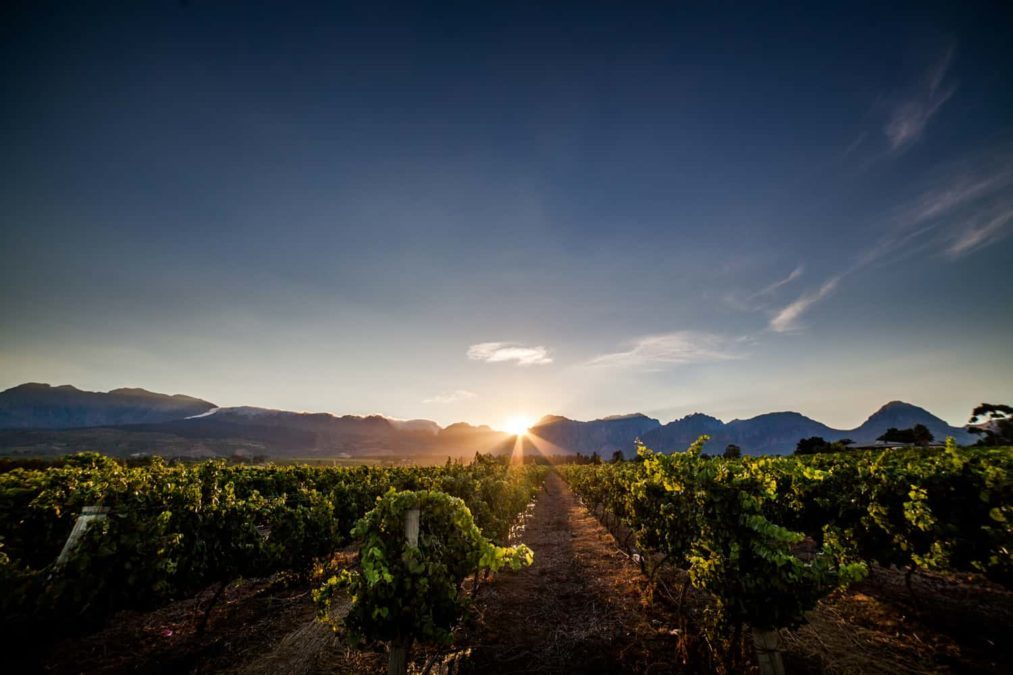 Fruit, not only from Nederburg itself but from its supplier farms across the Western Cape, came into the cellars in remarkably healthy, crisp conditions. Photo: Supplied/Nederburg