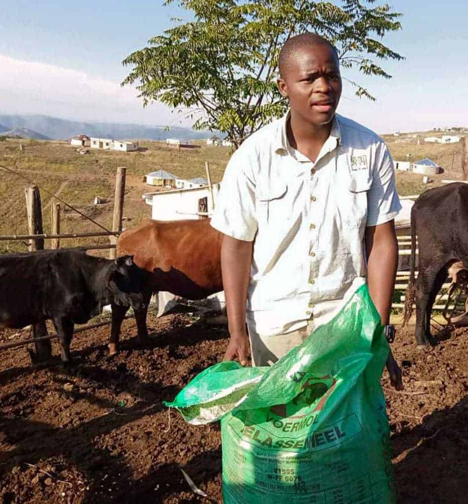 Thabo Cele, a young KwaZulu-Natal farmer, has come to rely on, among others, the Voermol Protein Block to strengthen his cattle, especially before and during the cold winter months. Photo: Supplied/Food For Mzansi
