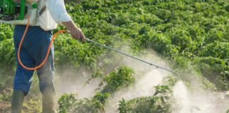 There is an extreme lack of transparency when it comes to the South African pesticide market, found a team of global researchers. Photo: Supplied/Food For Mzansi
