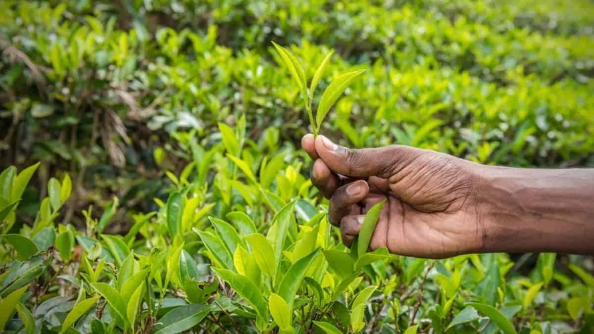 The latest edition of the BeyondCovid business survey made a number of shocking revelations about South Africa's small-scale farmers. Photo: Supplied/Food For Mzansi