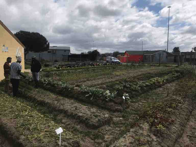 The four friends behind Abathethi Food Garden in Nyanga grow organic vegetables in their garden at Eyethu Educare Crèche in Nyanga, Cape Town: Photo: Supplied/ Food For Mzansi