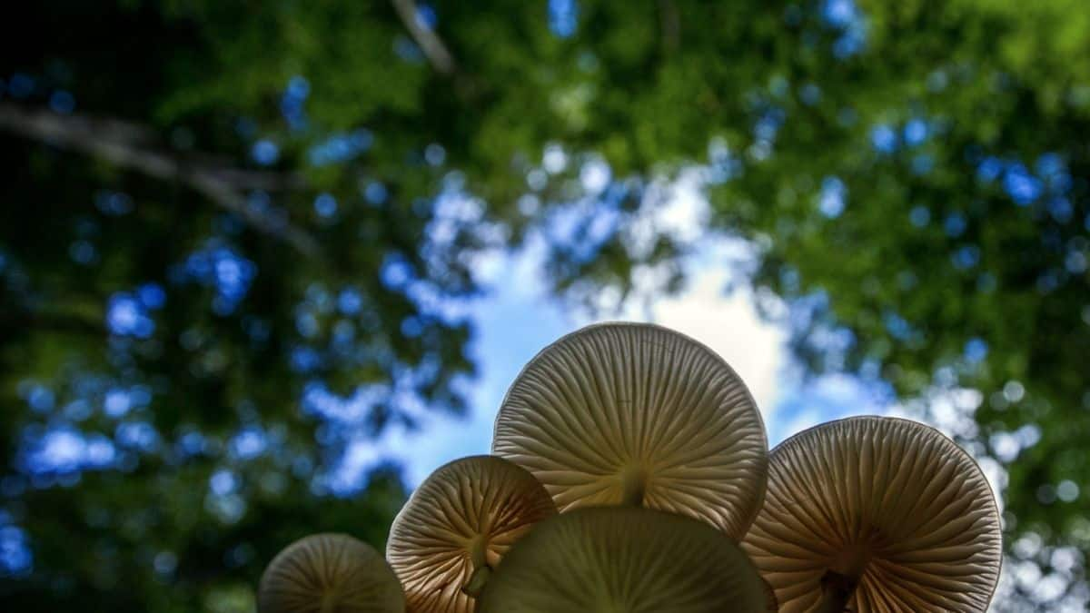 The vast mushroom kingdom could play an important role in tackling the planets's problem with plastic, believe researchers. Photo: Supplied/Food For Mzansi