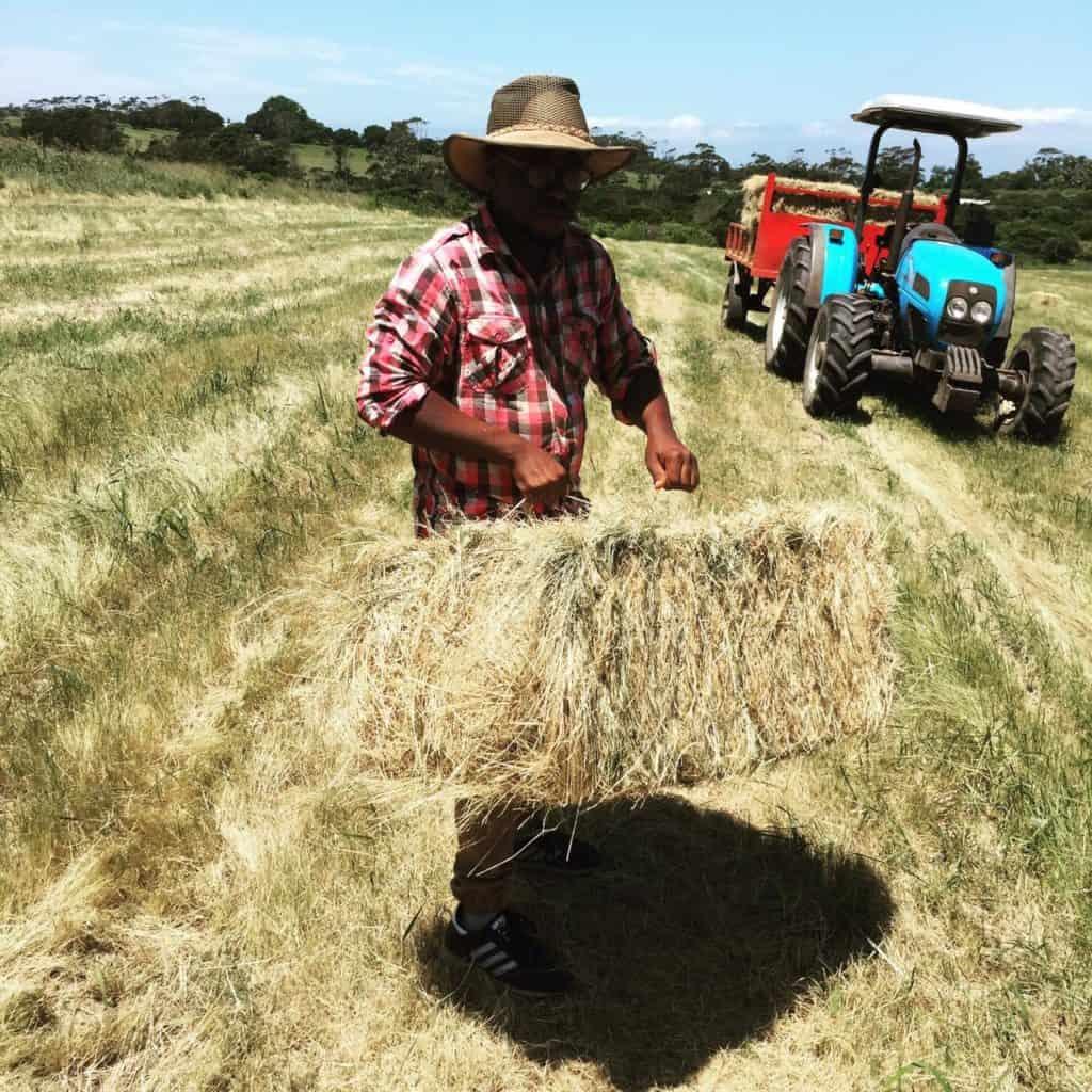 dairy farmer Siviwe Tikana