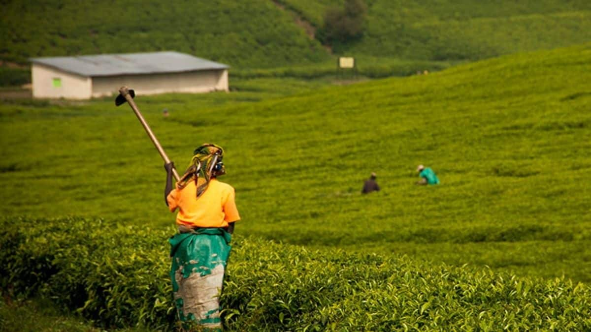 Sub-Saharan Africa has the highest export and second highest import costs in the world, argues Antonie Delport, the head of Syngenta South Africa. Photo: Radka Stankova/Shutterstock