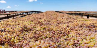 raisins industry