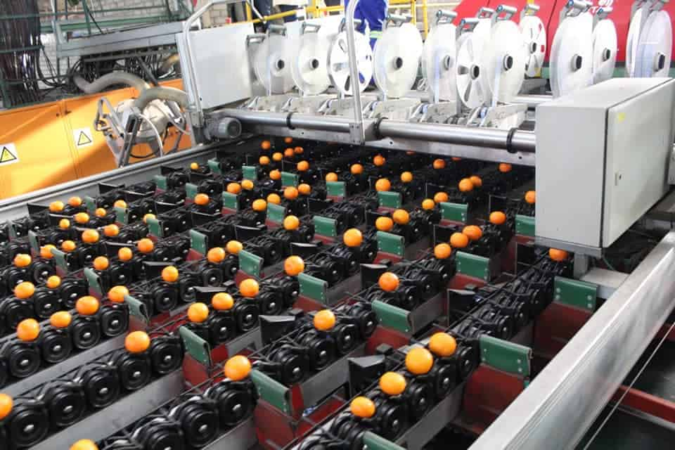 Citrus producers in the Sunday's River Valley local municipality are among the top agricultural employers with more than 4 000 workers. Photo: Supplied/Food For Mzansi