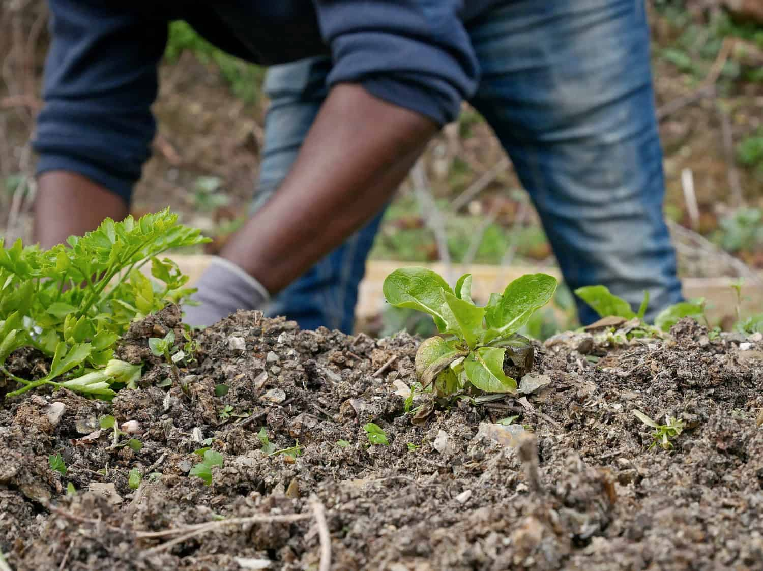 TLU SA Young Farmer of the Year entries close today, so enter while you can. Photo: Food For Mzansi Library