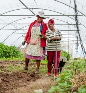 Community farmer: Some of the women of Siyazama Community Allotment Garden Association in Khayelitsha have all retired and they have dedicated their whole lives to their organic vegetable garden. Photo: Supplied/Food For Mzansi