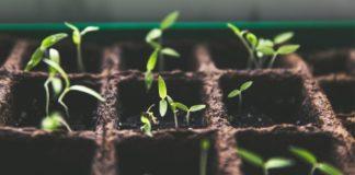 how to grow seedlings