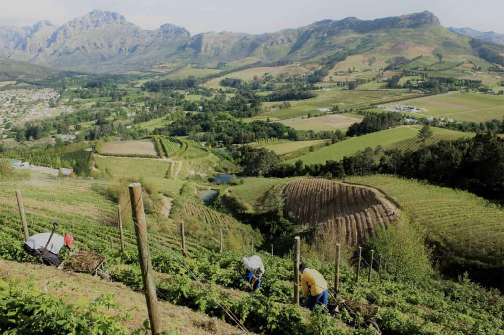 Raymond and Betty O'Grady own Hillcrest Berry Orchards, located on Helshoogte Pass in Stellenbosch. Photo: Supplied/Hillcrest Berry Orchards