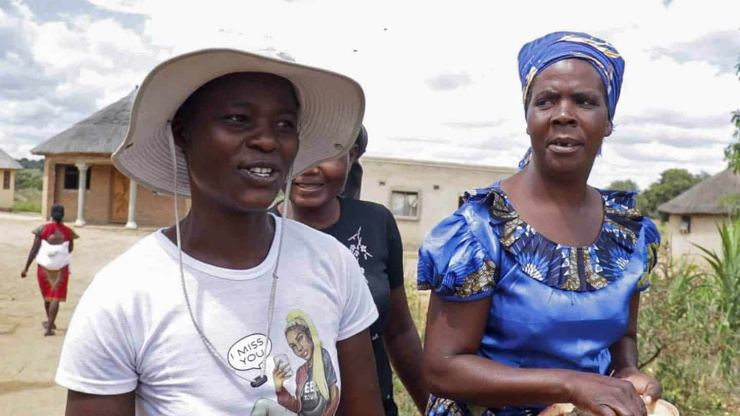 Sibanda and her colleagues harvest an average of 10kg of maggots every three days, drying them then mixing them with other components to make chicken feed. Photo: Supplied