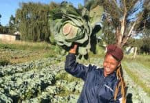 Njabulo Mbokane, who farms on leased land in Ermelo and Lothair in Mpumalanga, was FarmSol's very first Youth Ambassador. Photo: Twitter