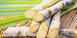 Mzansi's sugarcane industry makes an important contribution to the national economy, given its agricultural and industrial investments, foreign exchange earnings, its high employment, and its linkages with major suppliers, support industries and customers. Photo: Supplied/Food For Mzansi