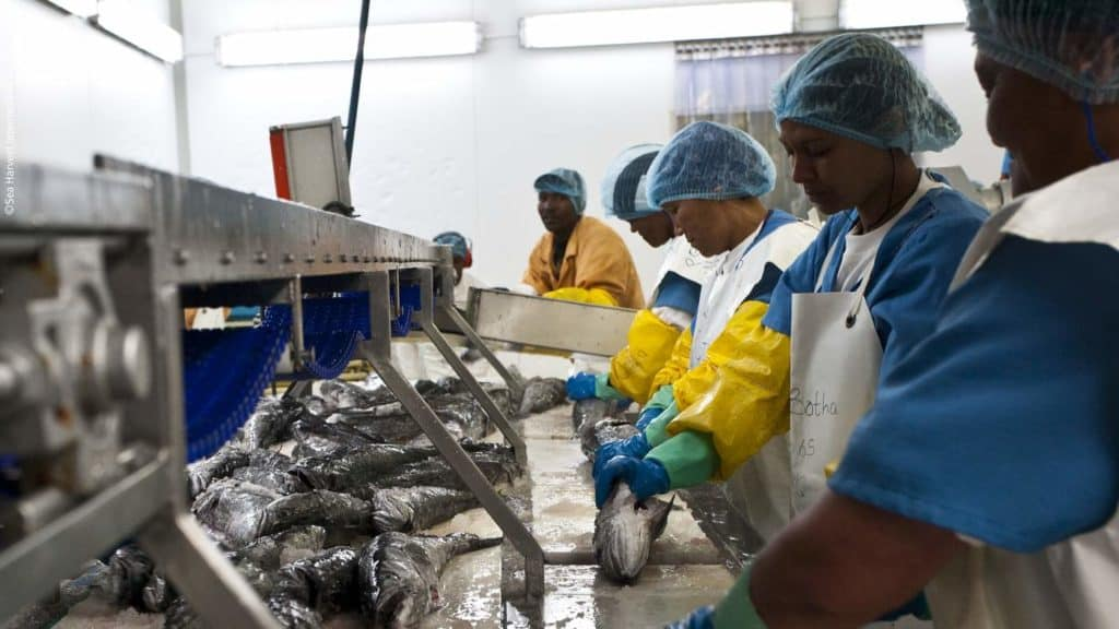 Valda Jumat, the breadwinner of her Cape Town family, is one of about 30 000 people who are employed by the hake industry's commercial sphere. Photo: Marine Stewardship Council