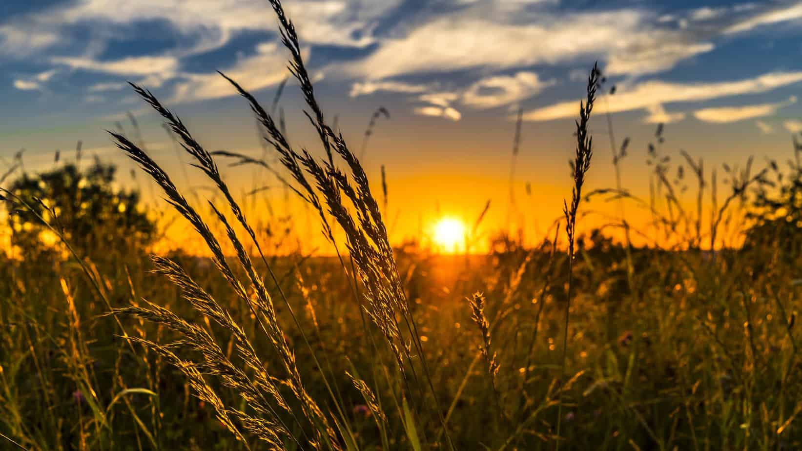While South Africa's economy has grown, the agricultural GDP has shrunk by 3.2% in the past year. Photo: Supplied/Food For Mzansi