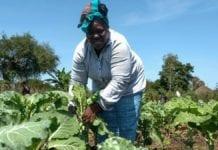 6 tips to thrive as a township farmer