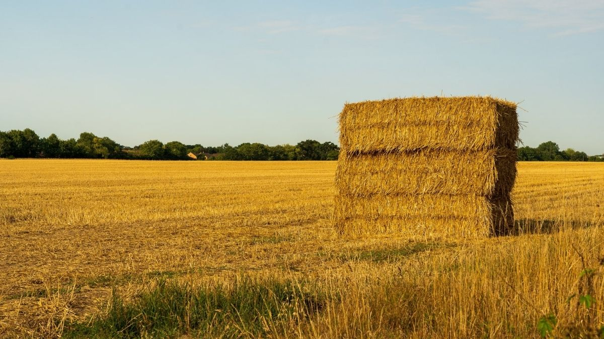 how to prevent rain damage on cut hay