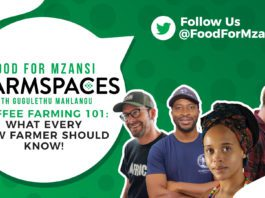 events: This week on Food For Mzansi #FarmSpaces with Gugulethu Mhlangu, we are talking coffee farming. Our panel of experienced coffee farmers are here to answer all of your questions