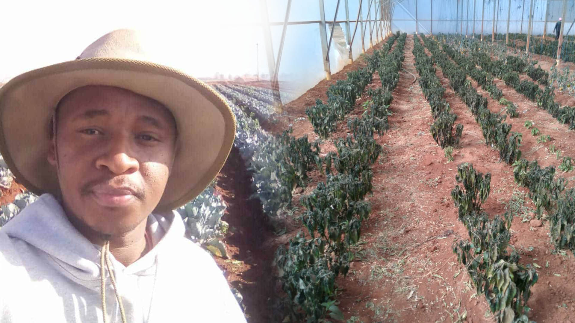 Gauteng farmer Eric Mauwane's crops were completely destroyed on his Tarlton farm after the country experienced what was dubbed the coldest night in the country. Photo: Supplied/Food For Mzansi