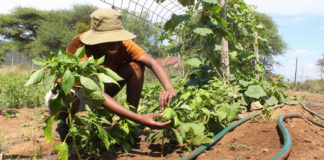 Young Farmer Regomoditswe Teke is investing her time in empowering other youth