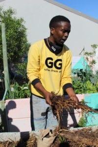 ghetto gardener