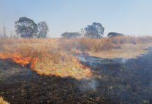 fire grazing