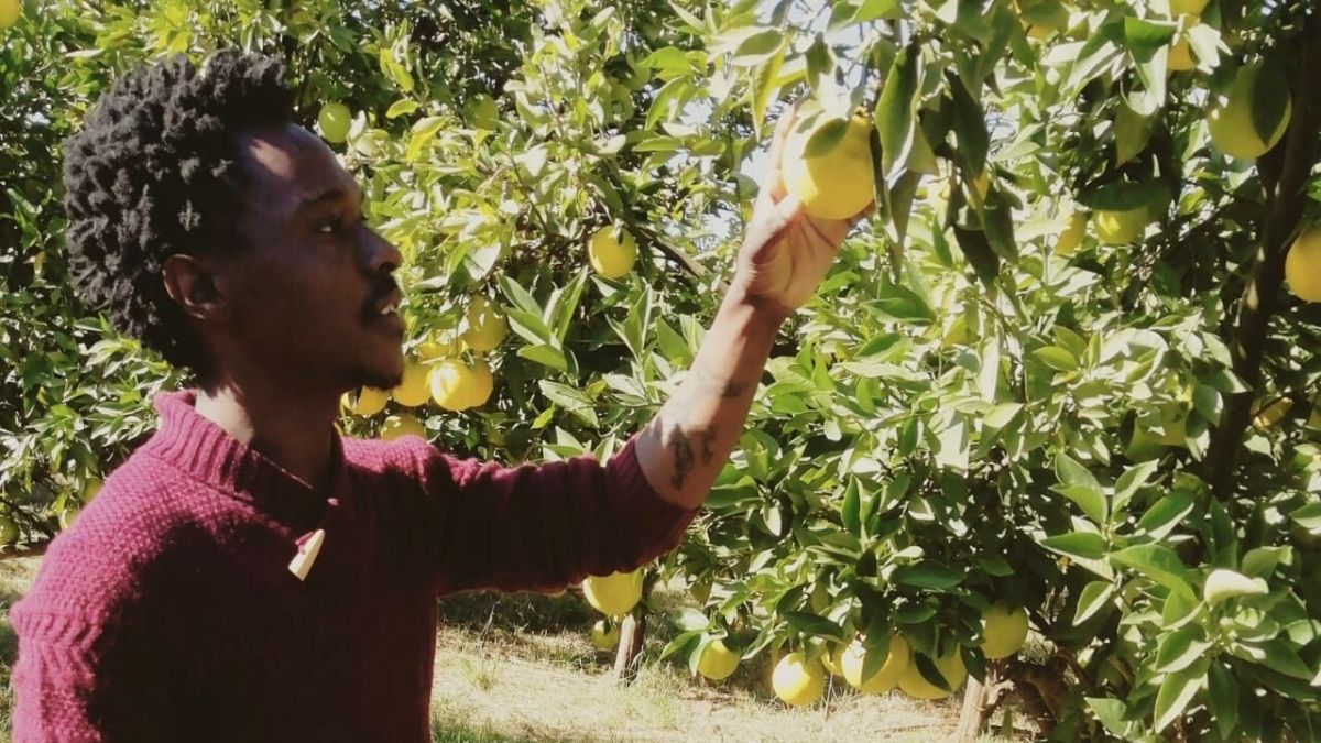 Young Farmer: An assistant production manager, Thabang Makola is learning as much as he can.