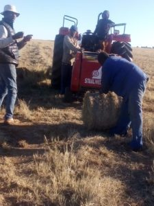 New farmer: Alice Radebe harvests grass on her farm to make hay. Photo: Supplied/Food For Mzansi