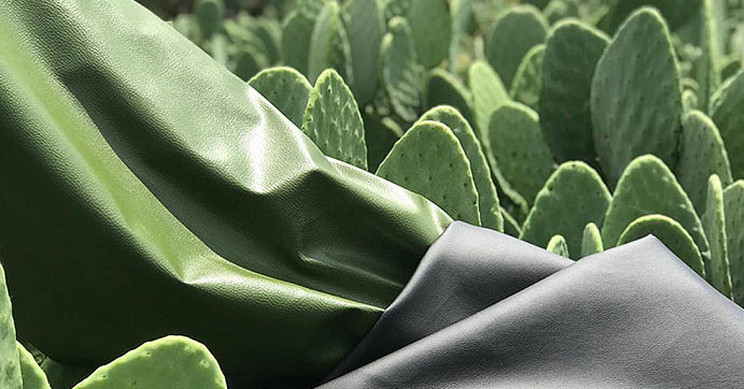 Cactus leather uses 200 litres of water to produce 1kg of the product, and each plant has a lifespan of up to 8 years. Photo: Supplied/Food For Mzansi